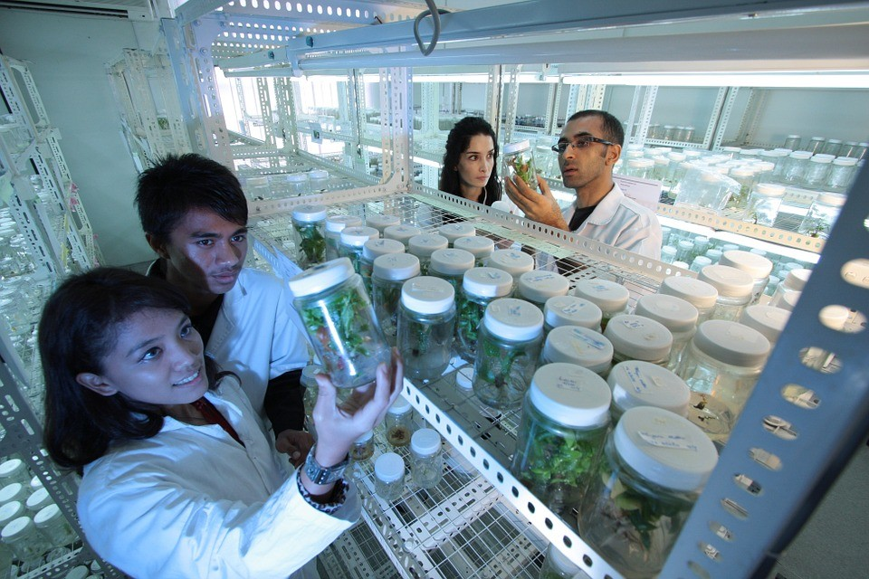 Marijuana Cannabis Research