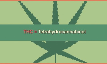 How Safe Is Marijuana?