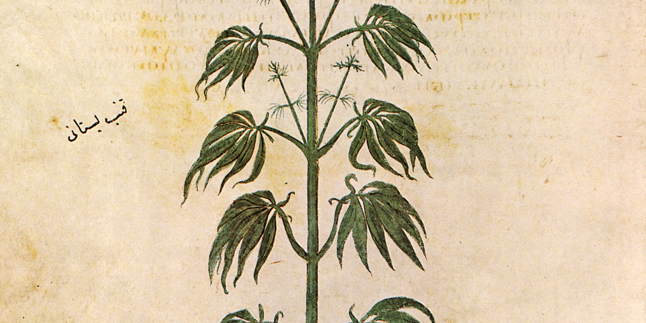 The Legal History of Cannabis