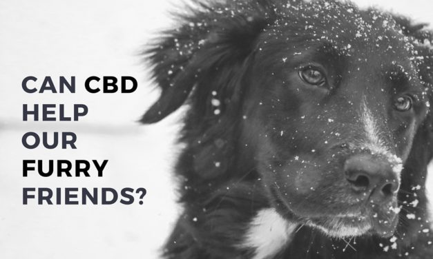 Can CBD Help Dogs?