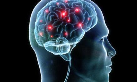 Cannabinoids In The Brain and Body