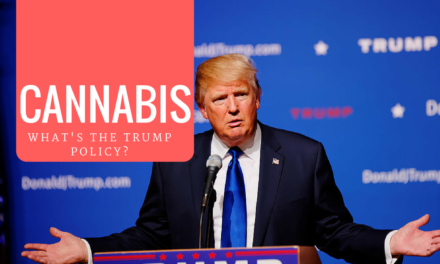 What Is Donald Trump's Stance on Cannabis?